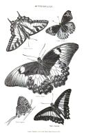 Pàgina 653