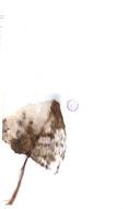 Pàgina 443